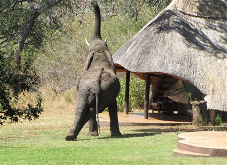Elephant nearby